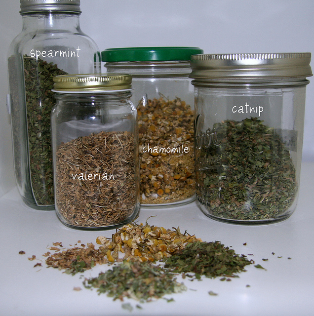 Jars with spearmint, valerian, chamomile, catnip