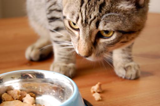 Cat eating catnip cookies